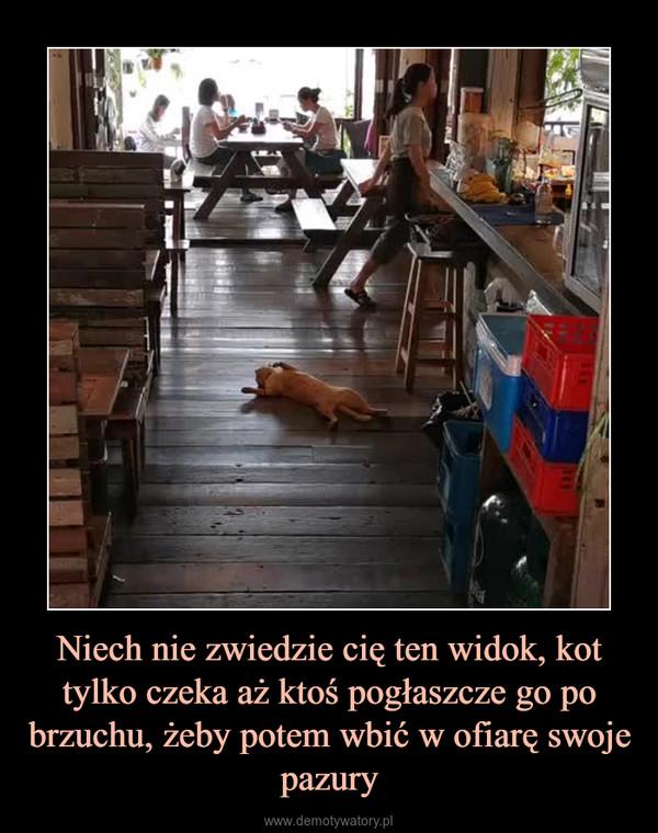 Niech nie zwiedzie cię ten widok, kot tylko czeka aż ktoś pogłaszcze go po brzuchu, żeby potem wbić w ofiarę swoje pazury –