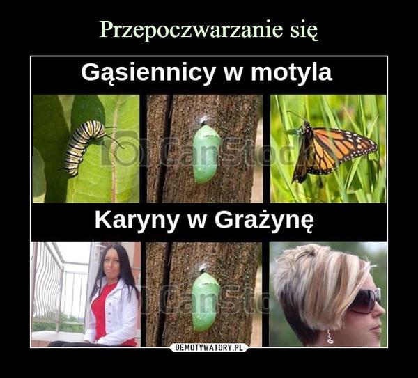 –  Gąsiennicy w motylaanStooKaryny w GrażynęanSto
