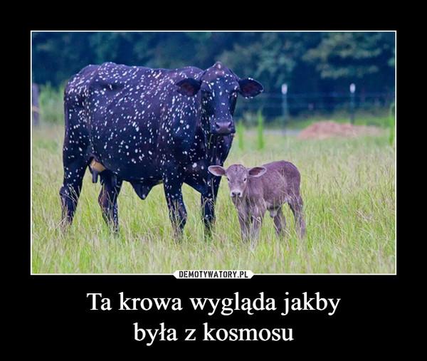 Ta krowa wygląda jakbybyła z kosmosu –
