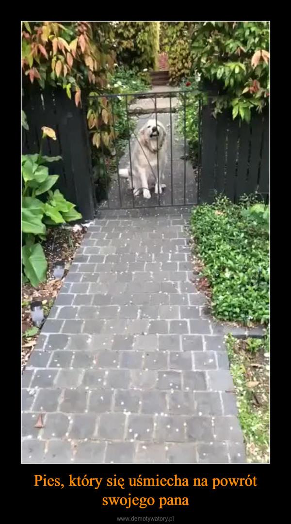Pies, który się uśmiecha na powrót swojego pana –