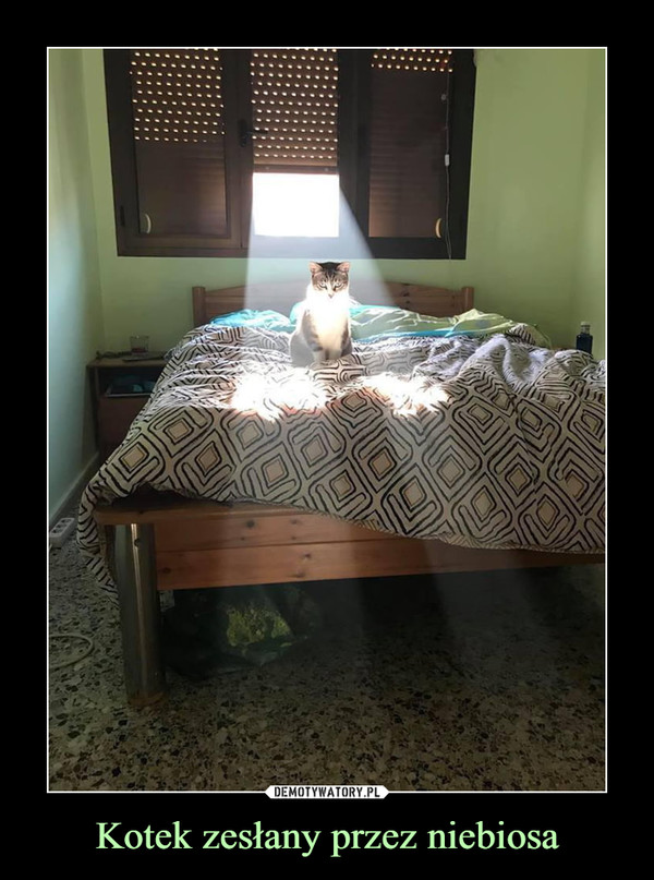 Kotek zesłany przez niebiosa –