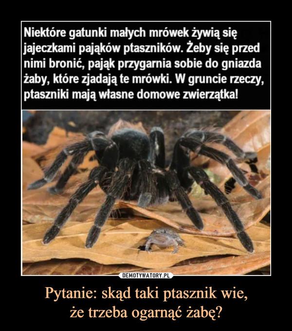 Pytanie: skąd taki ptasznik wie,że trzeba ogarnąć żabę? –  Niektóre gatunki małych mrówek żywią się jajeczkami pająków ptaszników. Żeby się przed nimi bronić, pająk przygarnia sobie do gniazda żaby, które zjadają te mrówki. W gruncie rzeczy, ptaszniki mają własne domowe zwierzątka!