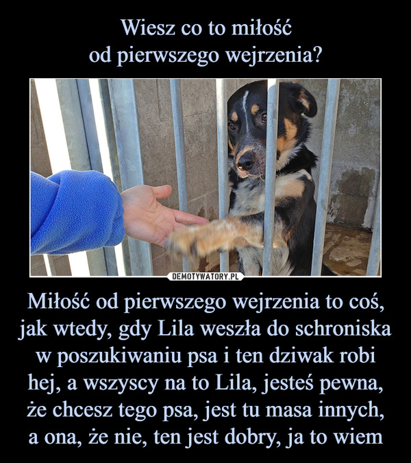 Miłość od pierwszego wejrzenia to coś, jak wtedy, gdy Lila weszła do schroniska w poszukiwaniu psa i ten dziwak robi hej, a wszyscy na to Lila, jesteś pewna, że chcesz tego psa, jest tu masa innych,a ona, że nie, ten jest dobry, ja to wiem –