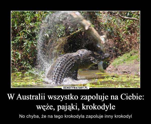 W Australii wszystko zapoluje na Ciebie: węże, pająki, krokodyle – No chyba, że na tego krokodyla zapoluje inny krokodyl