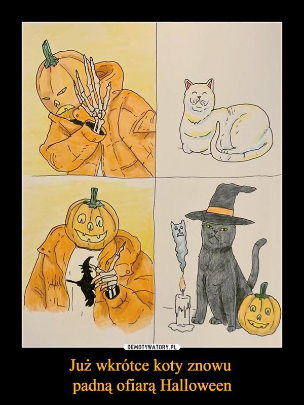 Już wkrótce koty znowu padną ofiarą Halloween –