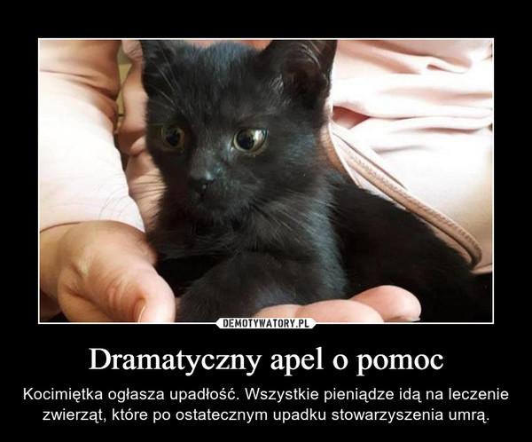 Dramatyczny apel o pomoc – Kocimiętka ogłasza upadłość. Wszystkie pieniądze idą na leczenie zwierząt, które po ostatecznym upadku stowarzyszenia umrą.
