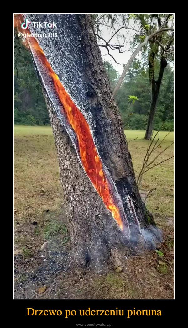 Drzewo po uderzeniu pioruna –