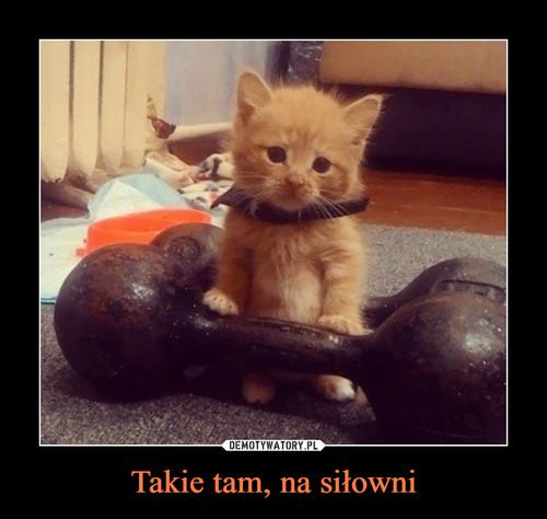 Takie tam, na siłowni