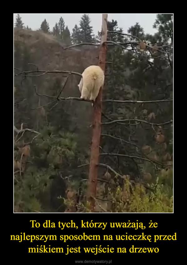 To dla tych, którzy uważają, że najlepszym sposobem na ucieczkę przed miśkiem jest wejście na drzewo –