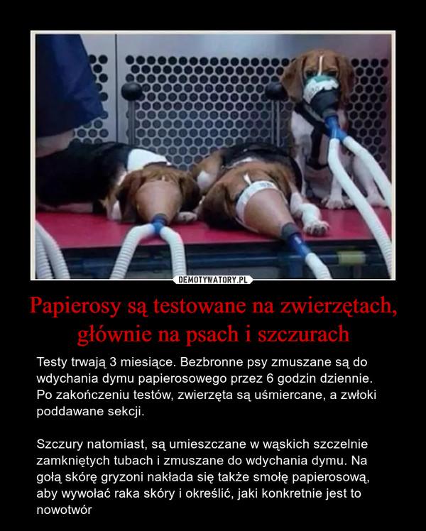 Papierosy są testowane na zwierzętach, głównie na psach i szczurach – Testy trwają 3 miesiące. Bezbronne psy zmuszane są do wdychania dymu papierosowego przez 6 godzin dziennie. Po zakończeniu testów, zwierzęta są uśmiercane, a zwłoki poddawane sekcji. Szczury natomiast, są umieszczane w wąskich szczelnie zamkniętych tubach i zmuszane do wdychania dymu. Na gołą skórę gryzoni nakłada się także smołę papierosową, aby wywołać raka skóry i określić, jaki konkretnie jest to nowotwór