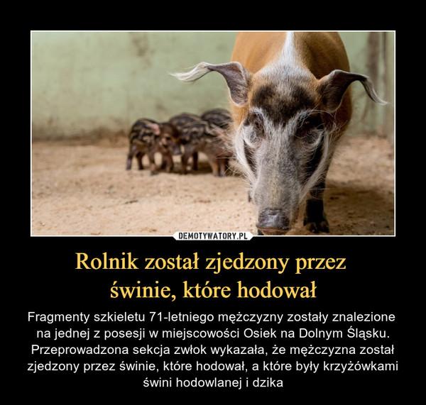 Rolnik został zjedzony przez świnie, które hodował – Fragmenty szkieletu 71-letniego mężczyzny zostały znalezione na jednej z posesji w miejscowości Osiek na Dolnym Śląsku. Przeprowadzona sekcja zwłok wykazała, że mężczyzna został zjedzony przez świnie, które hodował, a które były krzyżówkami świni hodowlanej i dzika