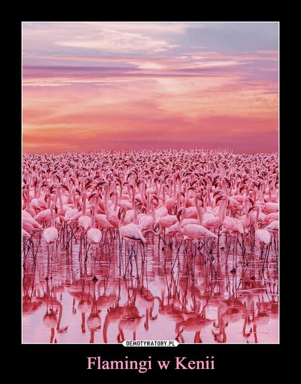 Flamingi w Kenii –