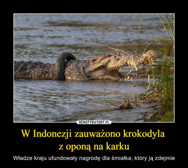 W Indonezji zauważono krokodyla z oponą na karku – Władze kraju ufundowały nagrodę dla śmiałka, który ją zdejmie