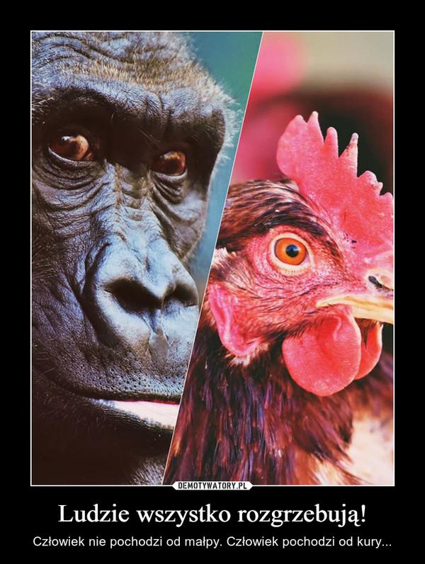 Ludzie wszystko rozgrzebują! – Człowiek nie pochodzi od małpy. Człowiek pochodzi od kury...