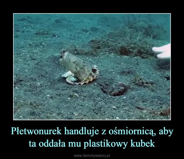 Płetwonurek handluje z ośmiornicą, aby ta oddała mu plastikowy kubek –