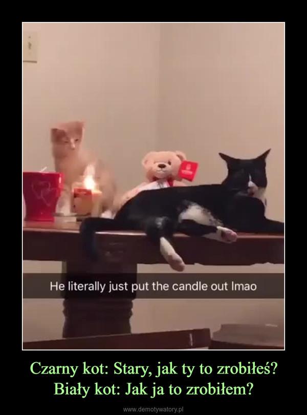 Czarny kot: Stary, jak ty to zrobiłeś?Biały kot: Jak ja to zrobiłem? –