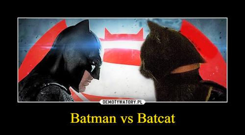 Batman vs Batcat