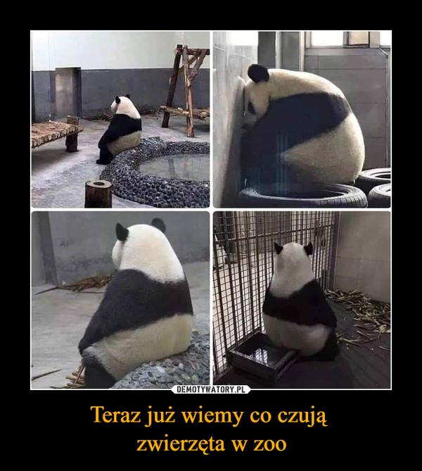 Teraz już wiemy co czują zwierzęta w zoo –