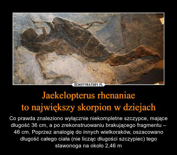 Jaekelopterus rhenaniaeto największy skorpion w dziejach – Co prawda znaleziono wyłącznie niekompletne szczypce, mające długość 36 cm, a po zrekonstruowaniu brakującego fragmentu – 46 cm. Poprzez analogię do innych wielkoraków, oszacowano długość całego ciała (nie licząc długości szczypiec) tego stawonoga na około 2,46 m