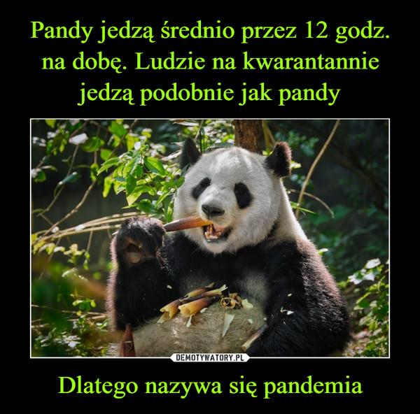 Dlatego nazywa się pandemia –