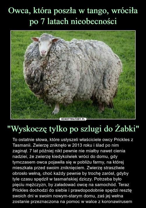 """Owca, która poszła w tango, wróciła po 7 latach nieobecności """"Wyskoczę tylko po szlugi do Żabki"""""""