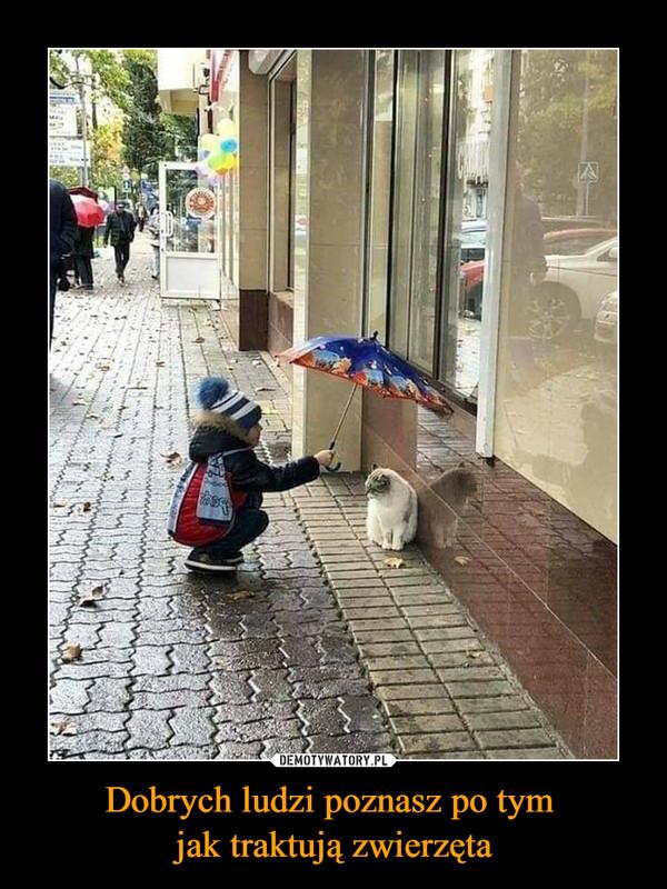 Dobrych ludzi poznasz po tym jak traktują zwierzęta –