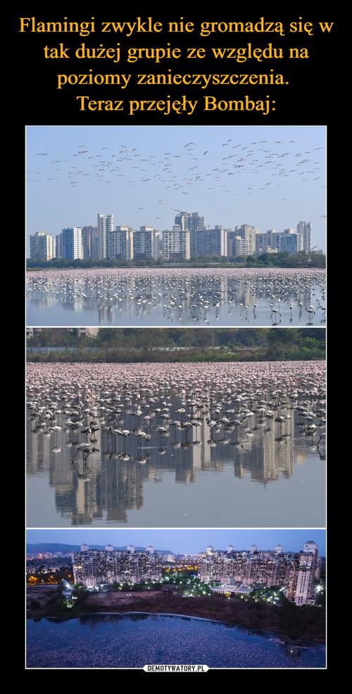 Flamingi zwykle nie gromadzą się w tak dużej grupie ze względu na poziomy zanieczyszczenia.  Teraz przejęły Bombaj: