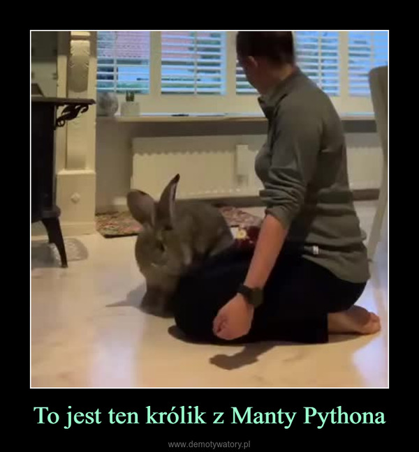 To jest ten królik z Manty Pythona –