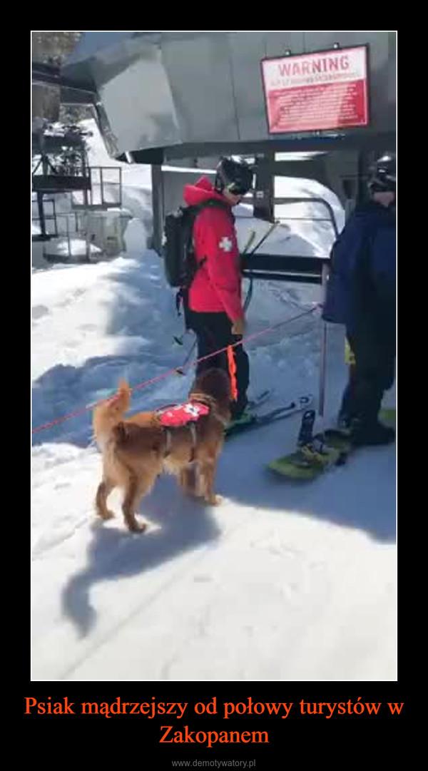 Psiak mądrzejszy od połowy turystów w Zakopanem –