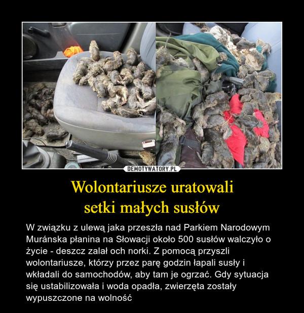 Wolontariusze uratowalisetki małych susłów – W związku z ulewą jaka przeszła nad Parkiem Narodowym Muránska płanina na Słowacji około 500 susłów walczyło o życie - deszcz zalał och norki. Z pomocą przyszli wolontariusze, którzy przez parę godzin łapali susły i wkładali do samochodów, aby tam je ogrzać. Gdy sytuacja się ustabilizowała i woda opadła, zwierzęta zostały wypuszczone na wolność