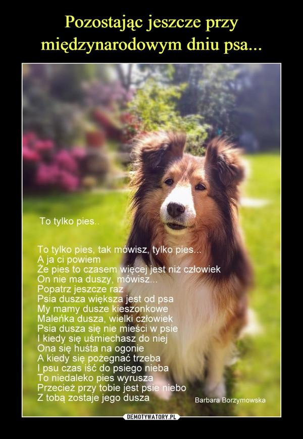 –  To tylko pies To tylko pies, tak mówisz, tylko pies A ja ci powiem Ze pies to czasem więcej jest niż człowiek On nie ma duszy mówisz Popatrz jeszcze raz Psia dusza większa jest od psa My mamy dusze kieszonkowe Maleńka dusza, wielki człowiek Psia dusza się nie mieści w psie I kiedy się uśmiechasz do niej Ona się huśta na ogonie A kiedy się pożegnać trzeba I psu czas iść do psiego nieba To niedaleko pies wyruszą Przecież przy tobie jest psilikebo Z tobą zostaje jego dusza Barbara Borzymowska