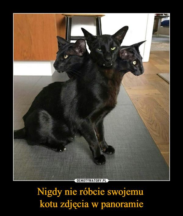 Nigdy nie róbcie swojemu kotu zdjęcia w panoramie –