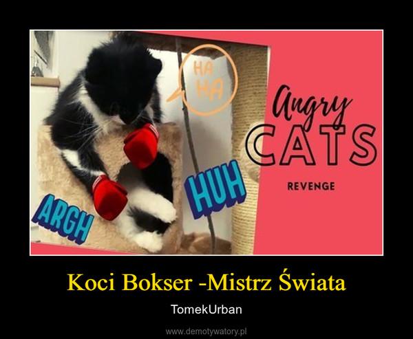 Koci Bokser -Mistrz Świata – TomekUrban