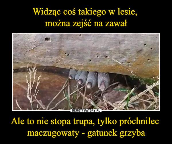 Ale to nie stopa trupa, tylko próchnilec maczugowaty - gatunek grzyba –