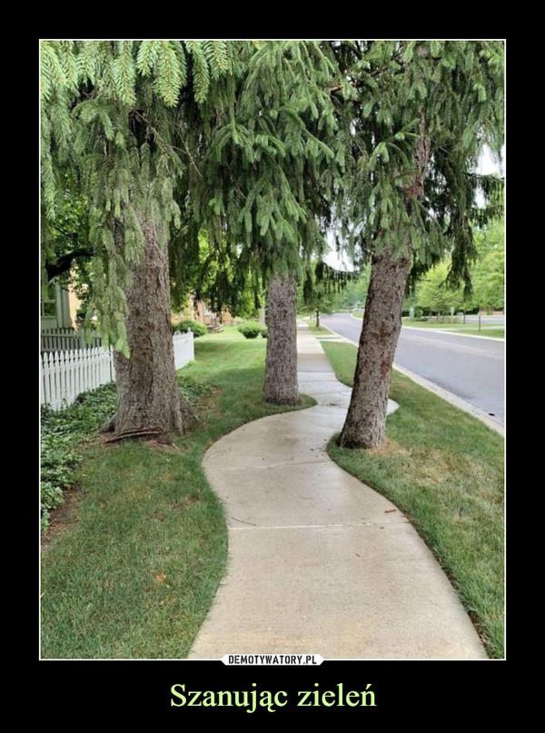 Szanując zieleń