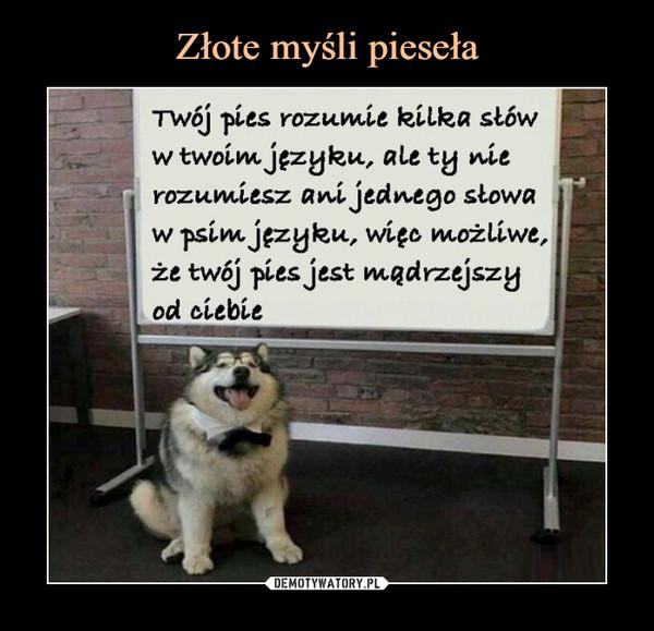 –  Twój pies rozumie kilka słóww twoim języku, ale ty nierozumiesz ani jednego słowaw psim języku, więc, możliwe,że twój pies jest mądrzejszyod ciebie