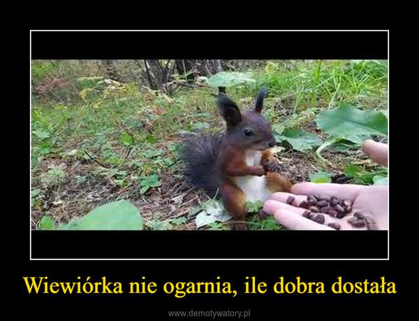 Wiewiórka nie ogarnia, ile dobra dostała –