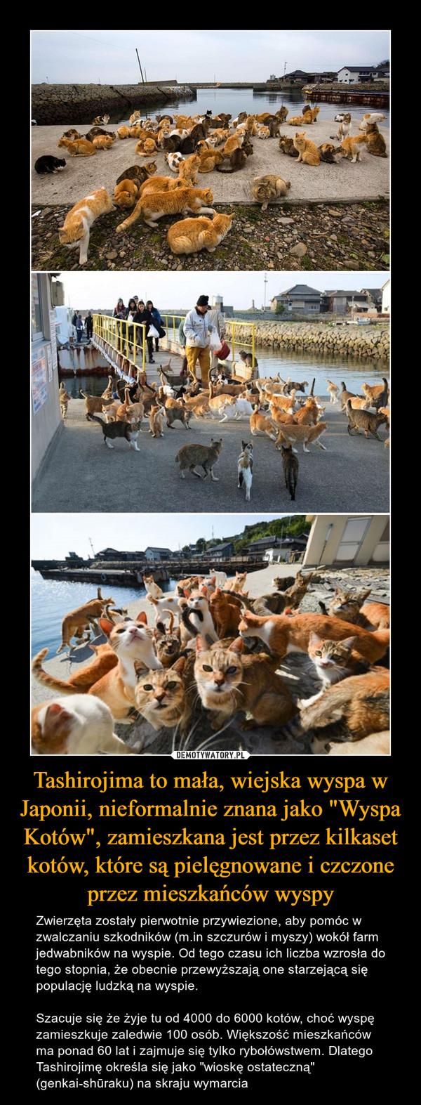 """Tashirojima to mała, wiejska wyspa w Japonii, nieformalnie znana jako """"Wyspa Kotów"""", zamieszkana jest przez kilkaset kotów, które są pielęgnowane i czczone przez mieszkańców wyspy – Zwierzęta zostały pierwotnie przywiezione, aby pomóc w zwalczaniu szkodników (m.in szczurów i myszy) wokół farm jedwabników na wyspie. Od tego czasu ich liczba wzrosła do tego stopnia, że obecnie przewyższają one starzejącą się populację ludzką na wyspie.Szacuje się że żyje tu od 4000 do 6000 kotów, choć wyspę zamieszkuje zaledwie 100 osób. Większość mieszkańców ma ponad 60 lat i zajmuje się tylko rybołówstwem. Dlatego Tashirojimę określa się jako """"wioskę ostateczną"""" (genkai-shūraku) na skraju wymarcia"""