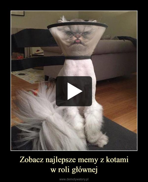 Zobacz najlepsze memy z kotamiw roli głównej –