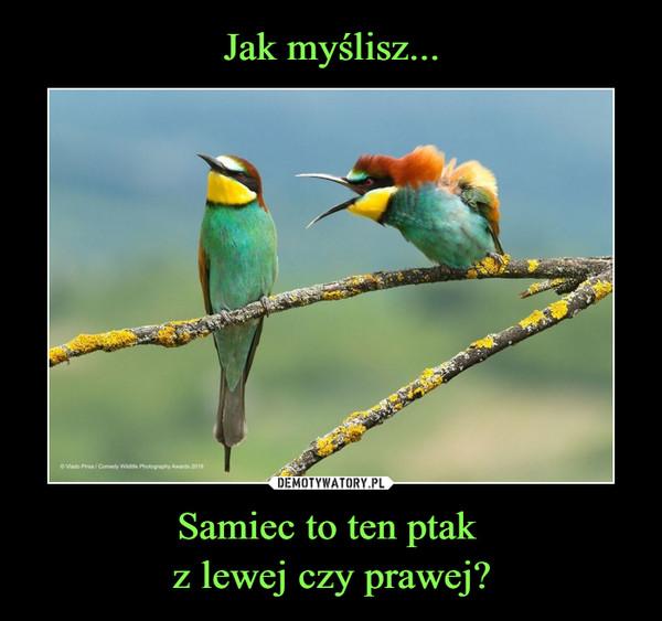 Samiec to ten ptak z lewej czy prawej? –