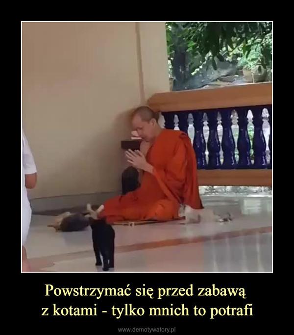 Powstrzymać się przed zabawą z kotami - tylko mnich to potrafi –