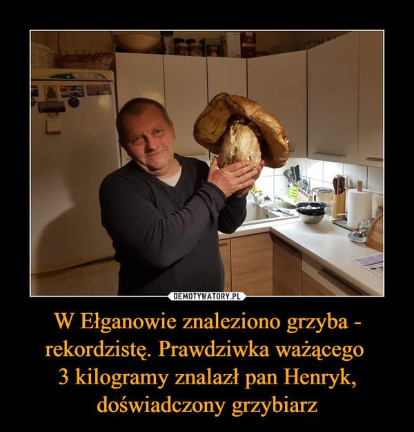 W Ełganowie znaleziono grzyba - rekordzistę. Prawdziwka ważącego 3 kilogramy znalazł pan Henryk, doświadczony grzybiarz –