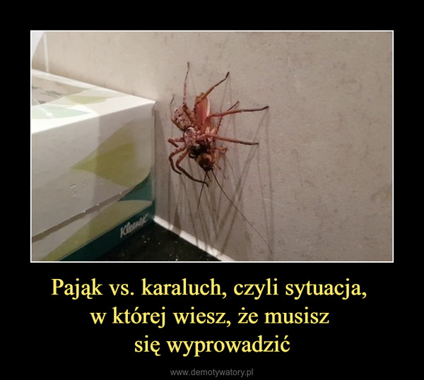 Pająk vs. karaluch, czyli sytuacja, w której wiesz, że musisz się wyprowadzić –
