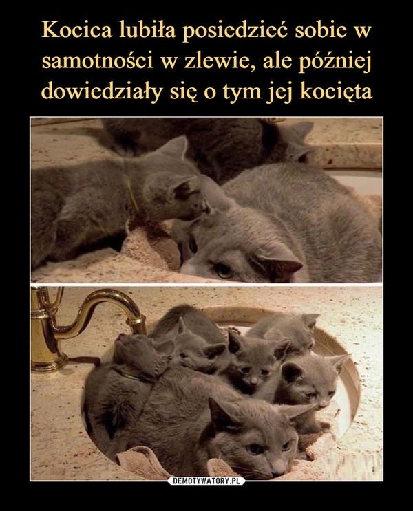 Kocica lubiła posiedzieć sobie w samotności w zlewie, ale później dowiedziały się o tym jej kocięta