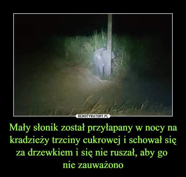 Mały słonik został przyłapany w nocy na kradzieży trzciny cukrowej i schował się za drzewkiem i się nie ruszał, aby go nie zauważono –