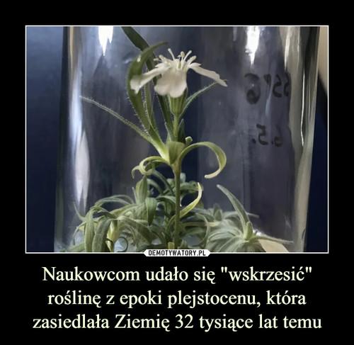 """Naukowcom udało się """"wskrzesić"""" roślinę z epoki plejstocenu, która zasiedlała Ziemię 32 tysiące lat temu"""