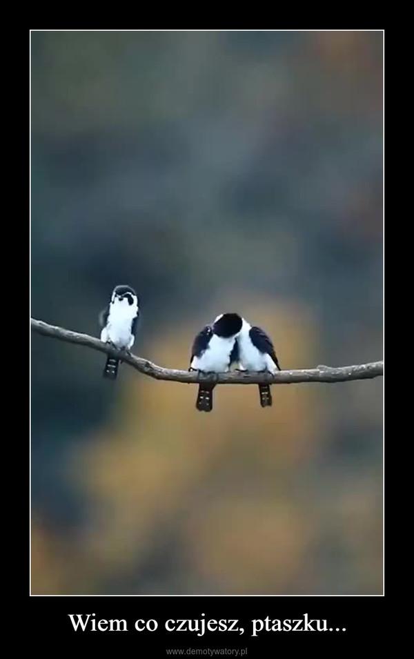 Wiem co czujesz, ptaszku... –