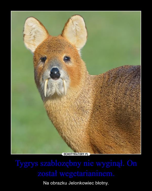 Tygrys szablozębny nie wyginął. On został wegetarianinem. – Na obrazku Jelonkowiec błotny.