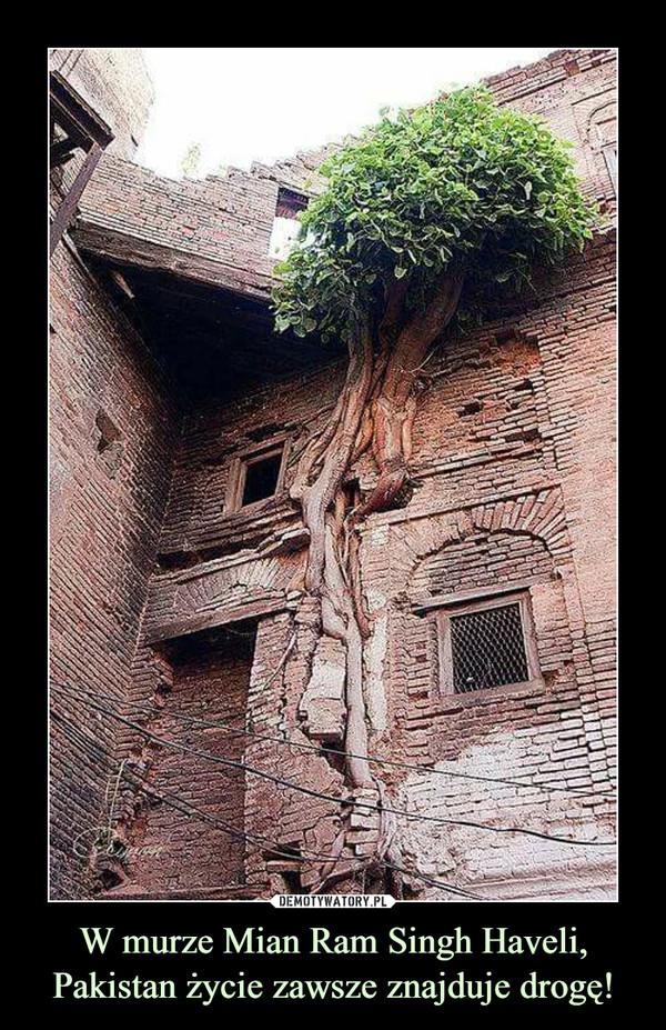 W murze Mian Ram Singh Haveli, Pakistan życie zawsze znajduje drogę! –