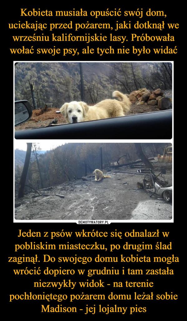 Jeden z psów wkrótce się odnalazł w pobliskim miasteczku, po drugim ślad zaginął. Do swojego domu kobieta mogła wrócić dopiero w grudniu i tam zastała niezwykły widok - na terenie pochłoniętego pożarem domu leżał sobie Madison - jej lojalny pies –